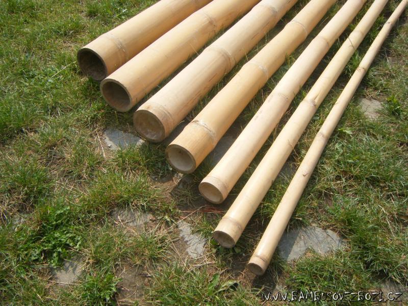 Bambus cena